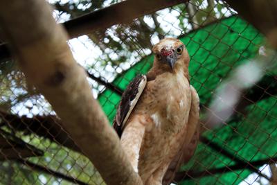 005_Burung yang luka di Kebun Binatang Medan. 20 Desember 2015
