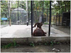 New orangutan cage - Mira Fantasia - Scorpion