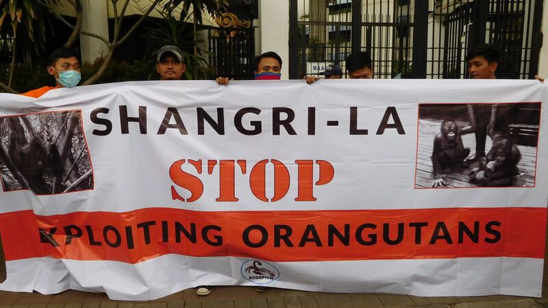 SCORPION Protests Orangutan Exploitation in Malaysia (January 12, 2016)
