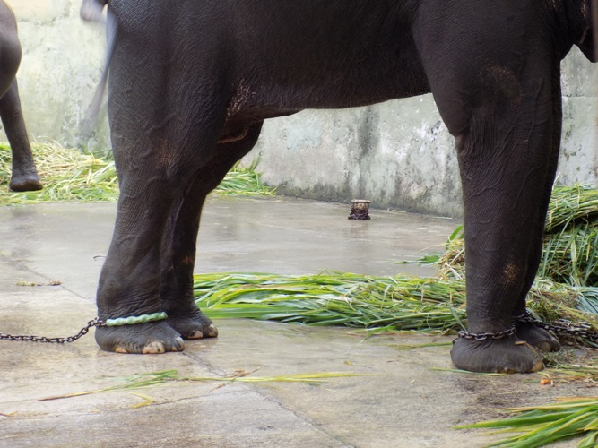 Scorpion Insists Wildlife Authority to End Cruelty to Elephants in Yogyakarta (October 31, 2016)