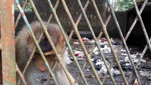 Scorpion: Stop Cruelty to Animals in Punti Kayu Mini Zoo! (December 16, 2016)