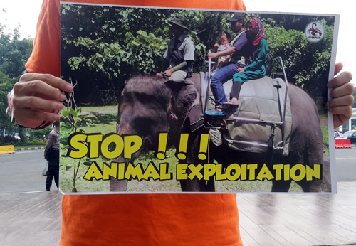 Cruelty Continues, Scorpion Demands President Jokowi to Stop Circuses and Wildlife Attractions (May 17, 2017)