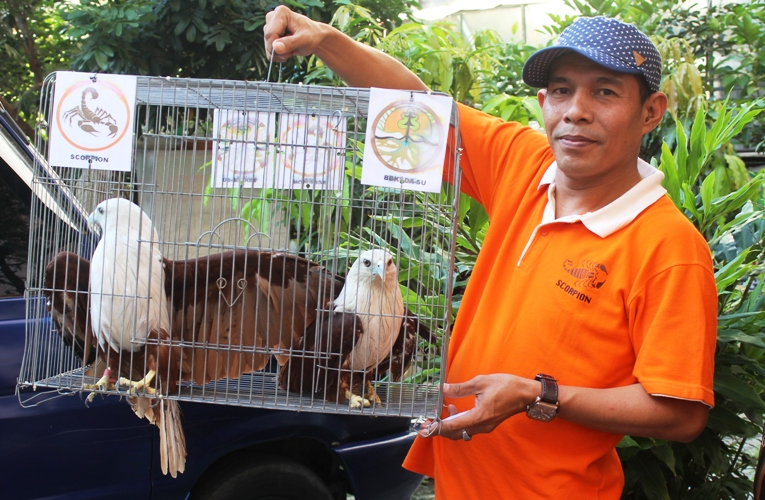 BBKSDA and Scorpion Confiscate Three Eagles from a Three-Star Hotel in Medan (May 19, 2017)