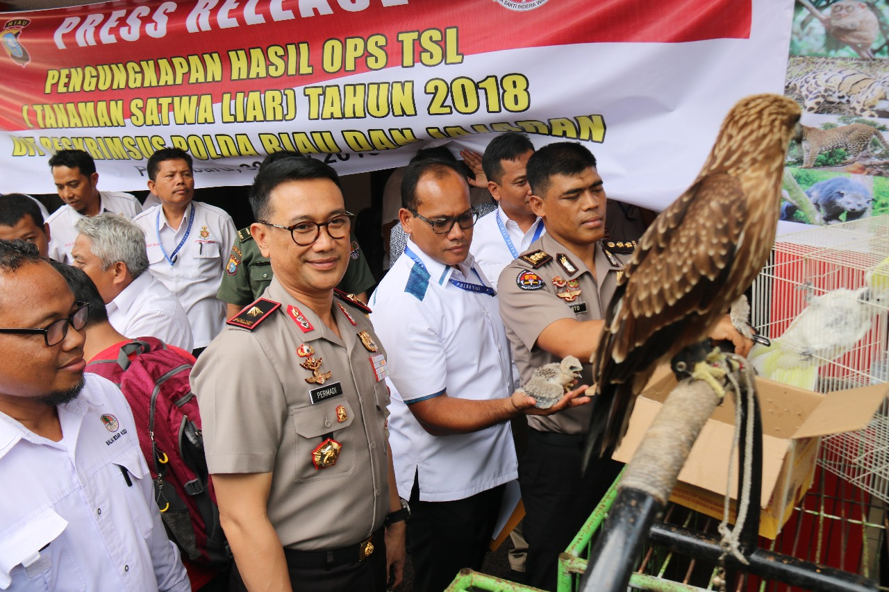 44 Protected Animals in Riau, Sumatra, will get the chance to be back in wild habitat (May 31, 2018)