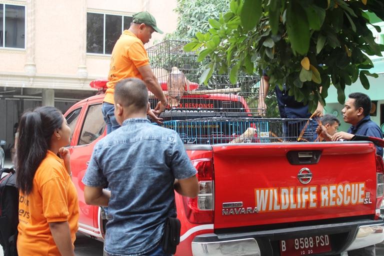 Rescuing 4 Heads of Wildlife in Medan, Sumatra (January 24, 2019)