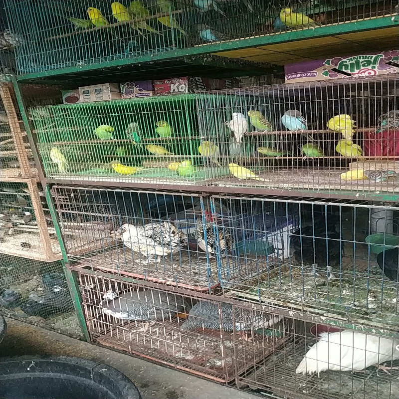 Monitoring wildlife trade in the star market, Medan city (April 22, 2020)