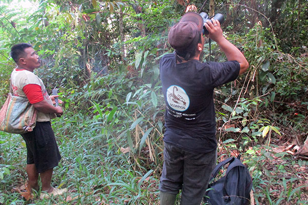 Preventing Tapanuli orangutan capture with participation of local villagers in Batu Satail Village (June 30, 2020)