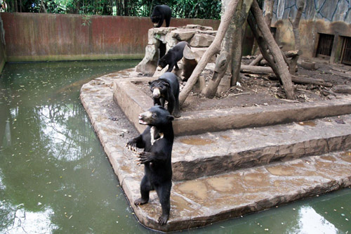 Jakarta Post: Zoos to be Standardized to Combat Animal Abuse (February 18, 2017)