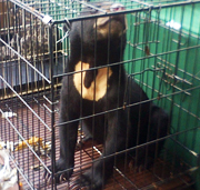 Police Arrest Six, Seize Protected Wildlife, in Trafficking Bust (November 18, 2015)