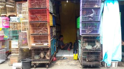 P1_Jatinegara wildlife market. (Photo SCORPION)