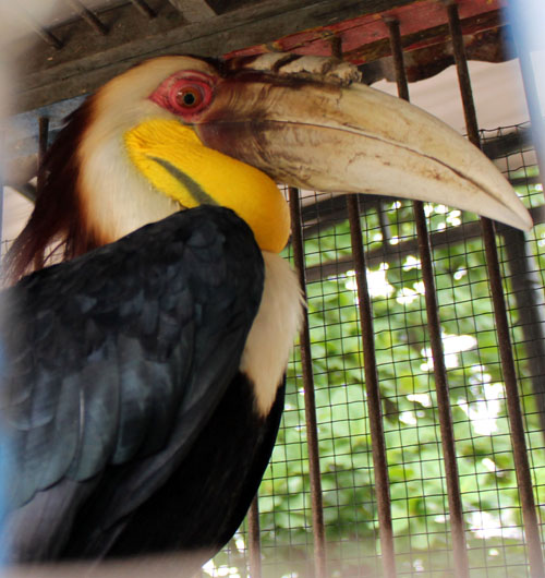 SPORC's Leopard Brigade in Sumatra Confiscates Three Protected Birds (February 25, 2016)
