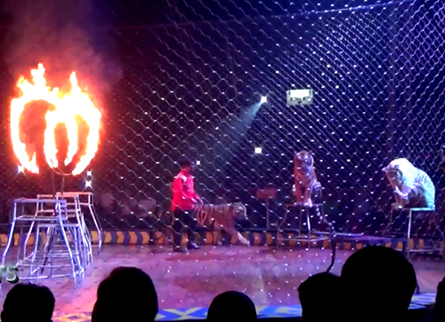 Jakarta Post: Concerns raised over animal exploitation in circus shows (January 22, 2018)