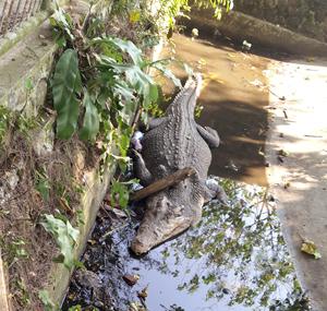 Bengkulu Zoo Abandoned for 21 years (July 30, 2015)