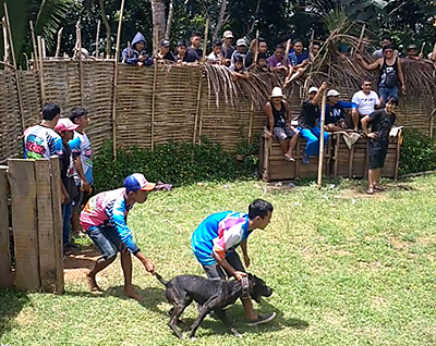 Dog-Wild Boar Fights Continue in Rural Area in West Java (March 11, 2018)