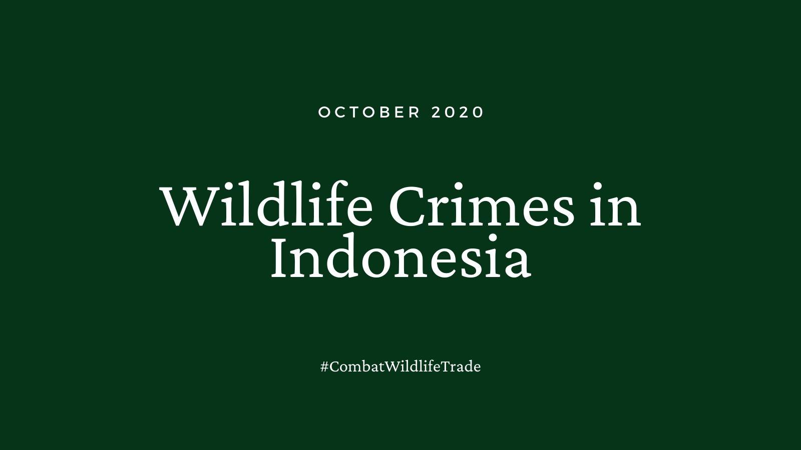 WIldlife Crimes in Indonesia, October 2020